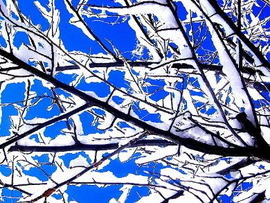 snowy_branches_main.JPG